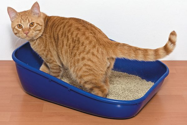 Look for ways to make the litter box more accessible for your senior cat. Photography by ©minoandriani | Getty Images.