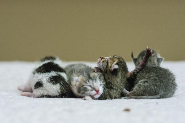 Kittens Winter (Kitten series)
