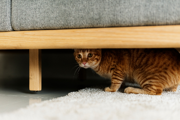 Image result for hiding cat