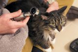 MVS Pet Care is capable of conducting full annual appointments for your cat.
