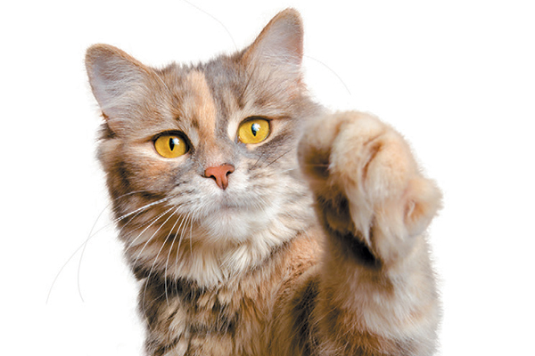 9 Interesting Facts About Cat Paws Catster