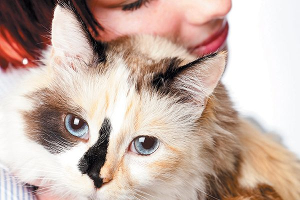 Often the behavior's that adoptive parents are looking for are found in older cats. Photography ©jonya | Getty Images.