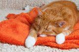 An orange tabby cat sick or asleep on a blanket.