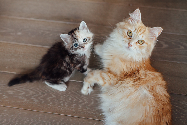 Baby kitten and adult cat completely different sizes.