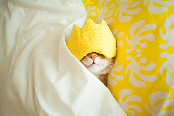 Cat sleeping in bed with face mask on.
