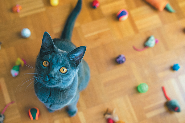 Let's take a closer look at how to clean cat toys and when is the right time to throw them out. Photography ©cunfek | Getty Images.
