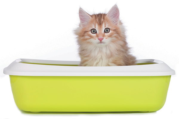 Find out exactly how to litter train a kitten here. Photography ©absolutimages | Getty Images.