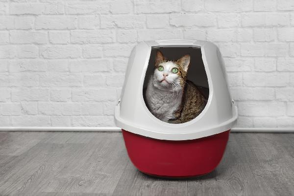 A cat peeking out of a litter box.