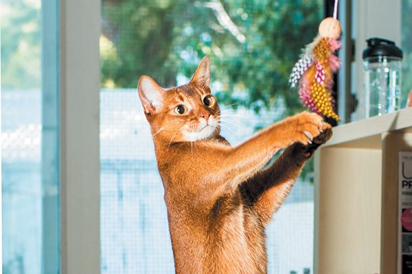 If your cat doesn't like one type of toy, move on to another. Photography ©Casey Elise.