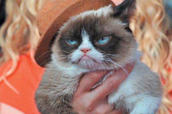 Grumpy Cat. Photography ©Alamy Stock Photos.