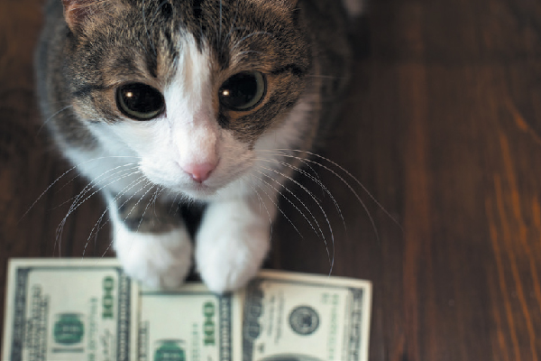A cat looking up with money.