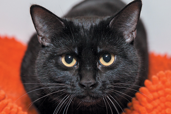 Beautiful photos of black cats help show their personalities. Photography ©Best Friends Animal Society/Lori Fusaro.