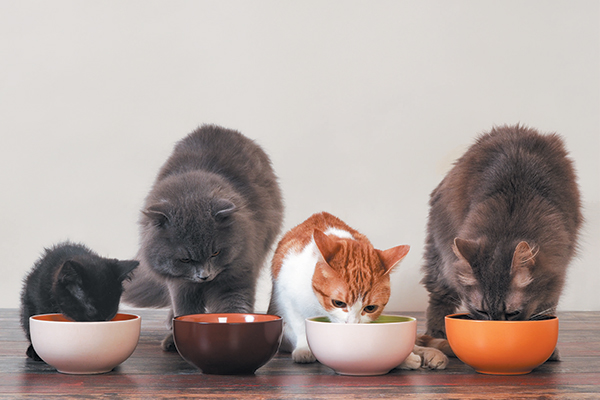 Your cat's nutrition depends on her stage of life. Photography ©kozorog | Getty Images.