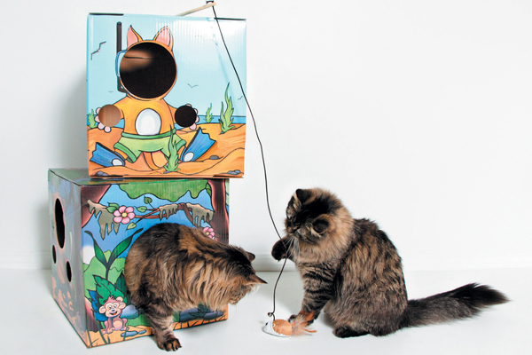 Kitty Cardboard boxes are perfect for your cat to feel safe and protected.