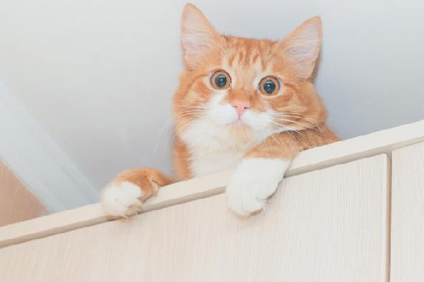 A cat peering over the edge of bookshelves.