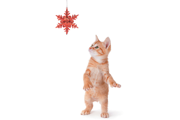 Orange tabby cat looking at Christmas ornament.
