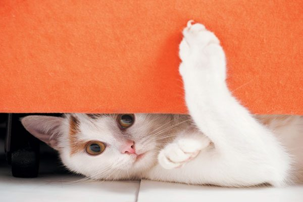 Don't let your guests try and go after your cat who is hiding. Photography ©alexey_ds | Getty Images.