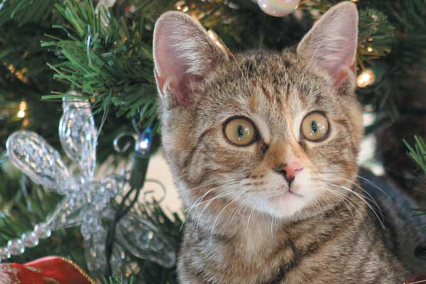 Follow these tips to make sure your kitty is safe around your Christmas tree. Photography ©talltrevor| Getty Images.