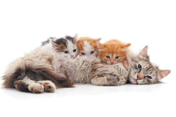 A mother cat surrounded by kittens.