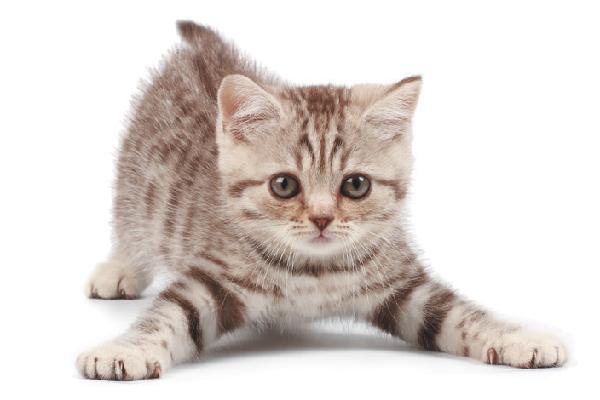 A playful kitten.