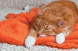 An orange cat who's sleeping or sick.