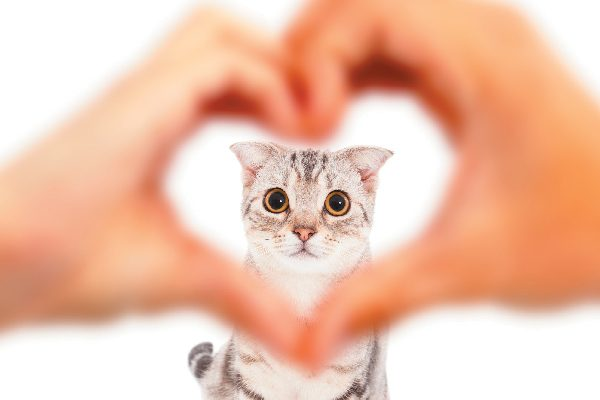 Cat in heart hands.