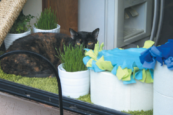 A windowsill can be paradise for your cat when you make a few catifications like adding a scratcher, cat grass and a thick shag carpet.