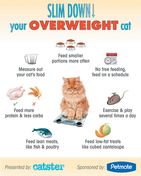 Slim down your overweight cat.