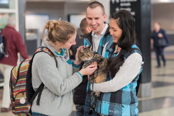 Meet Xeli, the Airport Therapy Cat