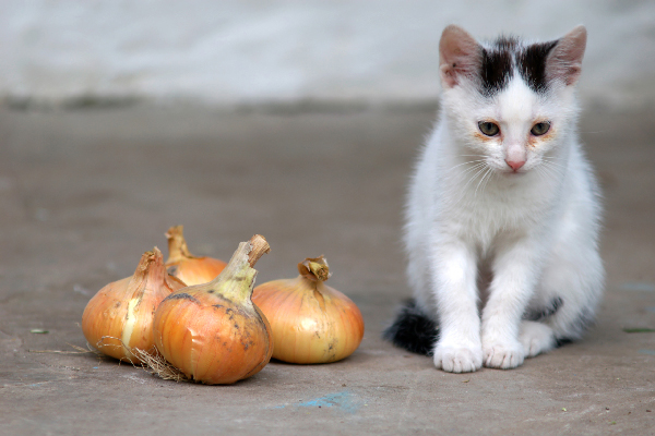 Can Cats Eat Onions? What to Know About Cats and Onions