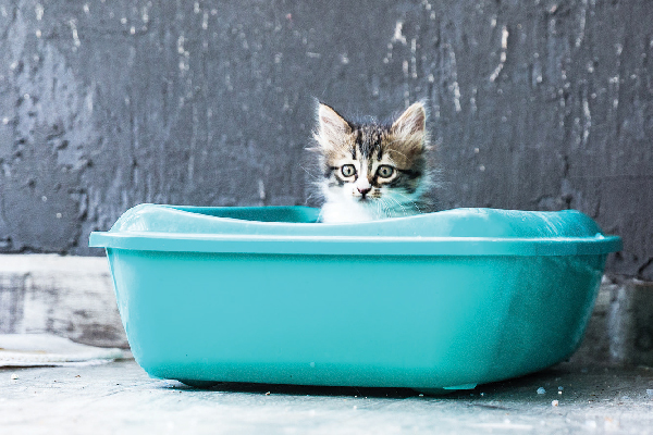 A small kitten in a litter box.
