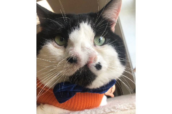 Ambassador Memphis has two noses. He's snuggly and loving and brings people joy with his pictures.