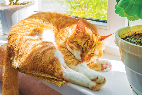 An orange tabby cat napping next to a sunny window.