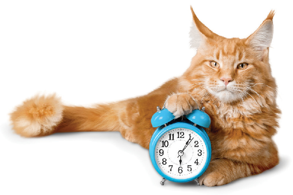 An orange tabby cat with a clock.