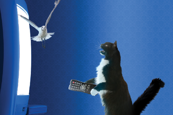 An indoor cat with a remote control yelling at a bird.