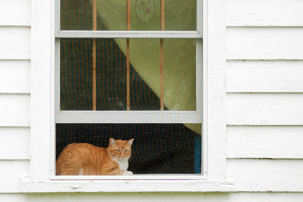 Orange tabby cat looking out the window.