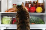 A cat looking through a fridge at fruits and veggies.