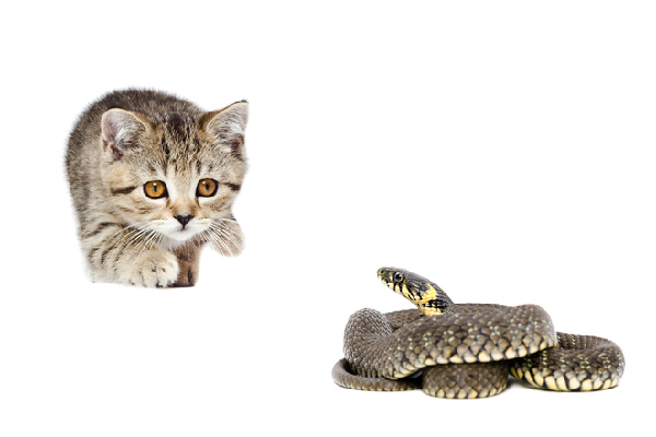 A cat looking at a snake.