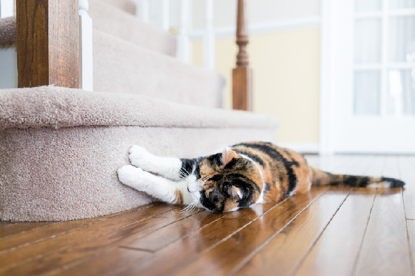A cat scratching carpet on the stairs.