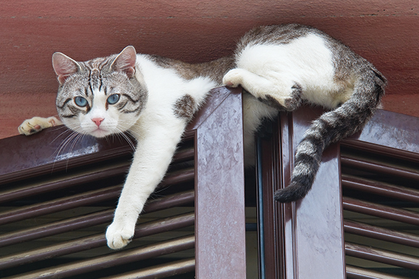 Why Do Cats Like Being Up High?