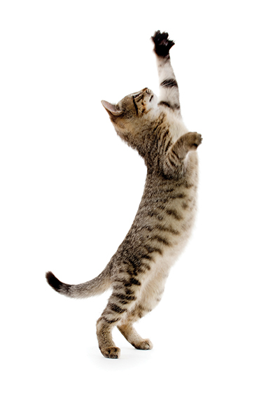 Keep your cat happy and healthy with probiotics! Photography by: ©EEl_Tony | Getty Images