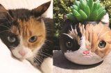 Meow 3D Cat Planter