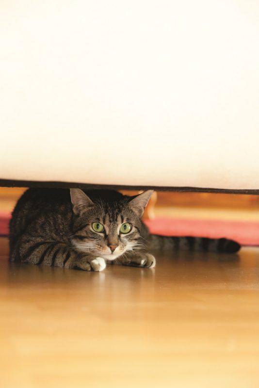 Rescue Cat Behavior Problems