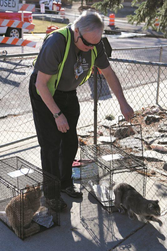 Humane society volunteer releasing neutered cat