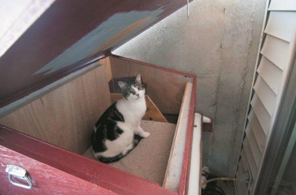 TNR cat in shelter