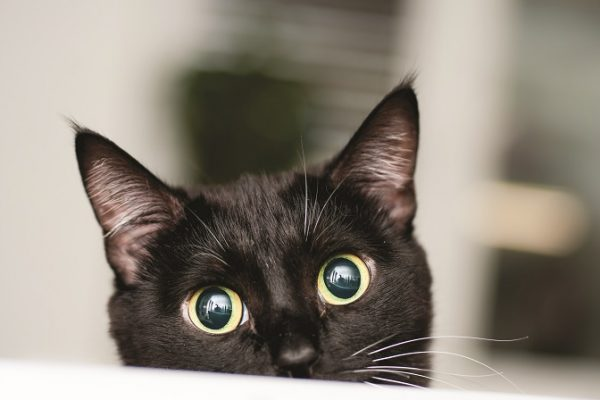 Feline Superstitions: Cats Weigh In