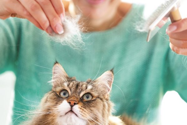 Grooming Your Cat – Do's, Don'ts and Disasters