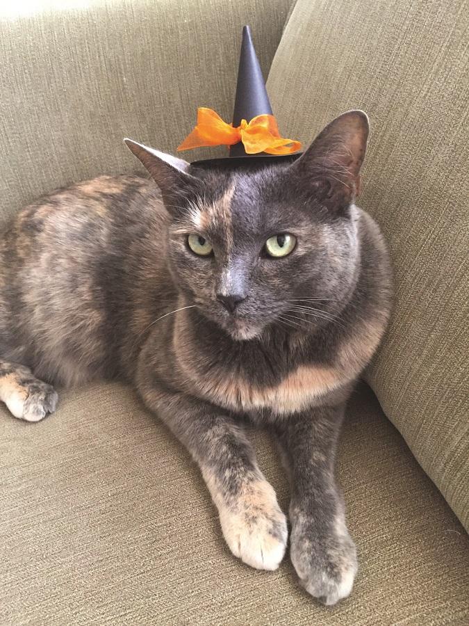 halloween hat on cat