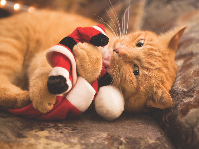 reduce cat holiday stress