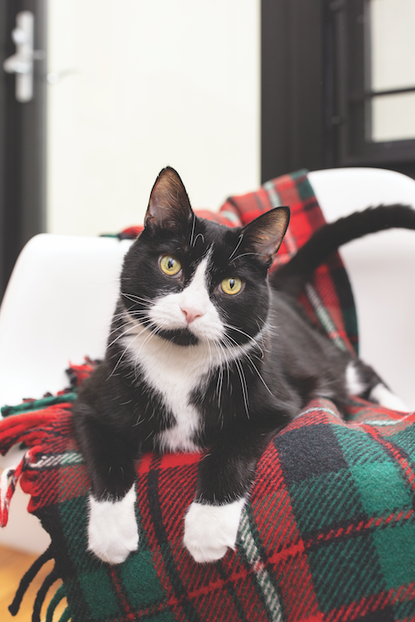 reduce your cat's holiday stress